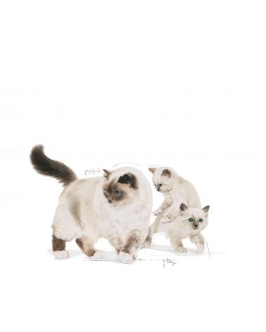 Royal Canin Gatti Mother & Babycat umido con Mousse di Pollo 195 Gr