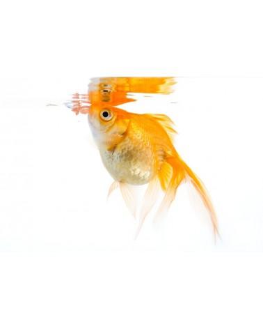 Oliver Mangime completo in fiocchi per pesci rossi 200 Gr